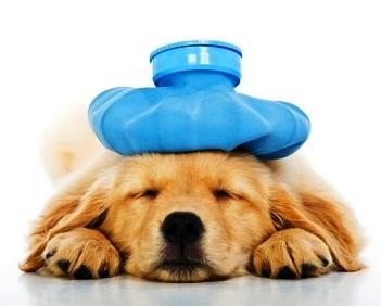Sick-Puppy-Copy