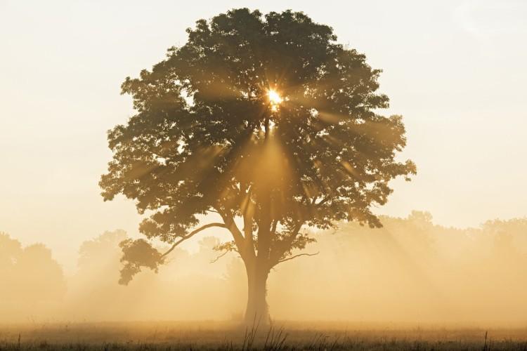 oak-tree-with-sun-rays